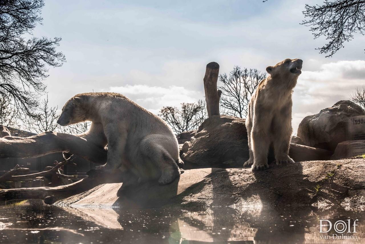 * @ THE ZOO * Nog even genoten van de relatieve rust in Ouwehands Dierenpark nu de panda's er nog niet zijn!