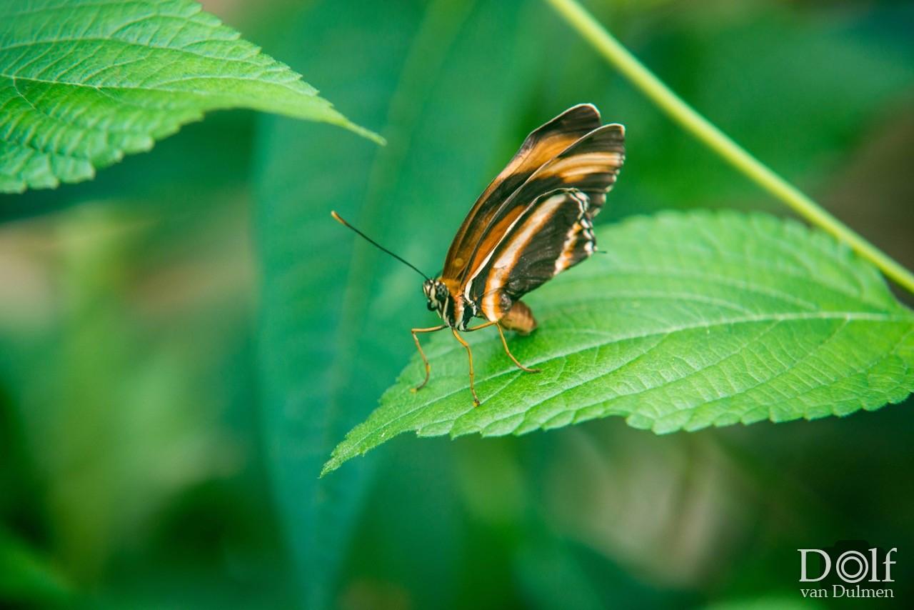 * VLINDERS * genieten in de vlindertuin van Burgers Zoo